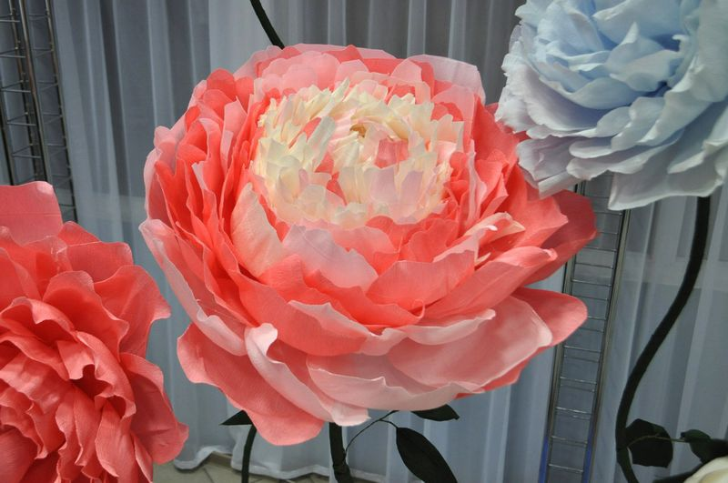 Бумажные цветы воронеж